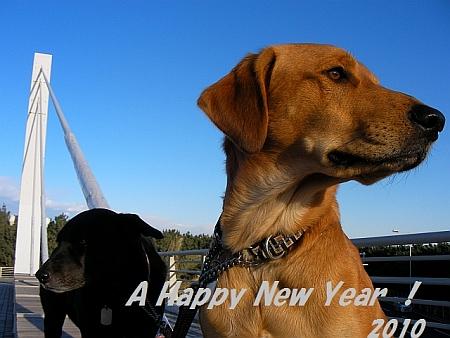 Sany1106happy_new_year